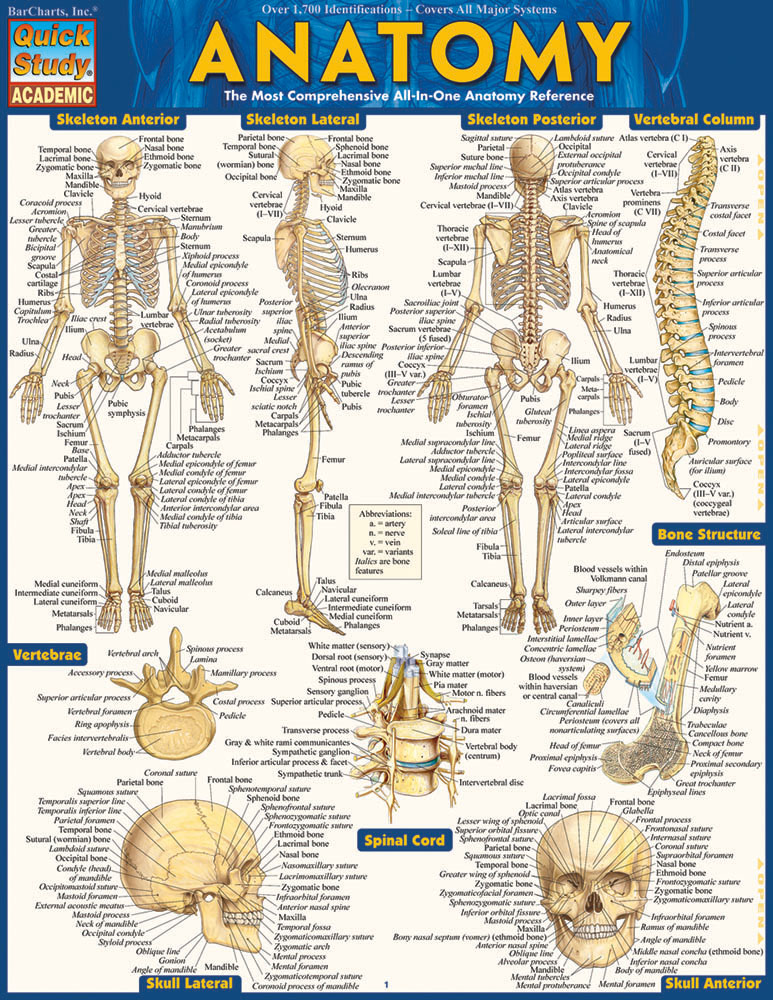 Image For Anatomy Study Guide