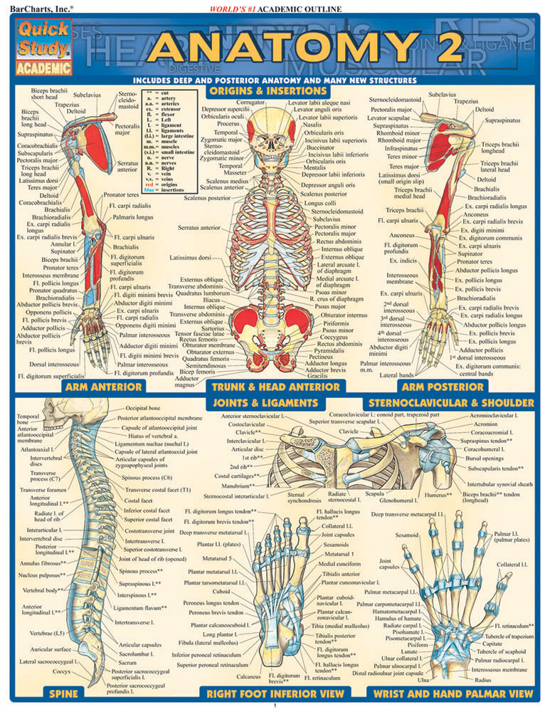 Image For Anatomy 2 Study Guide